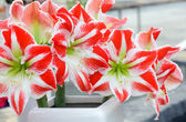 Bouquet de fleurs Amaryllis — Photo