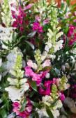Big wonderful lupine flowers bouquet — Stock Photo