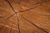 Anelli degli alberi — Foto Stock