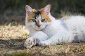 Outdoor cat — Stock Photo