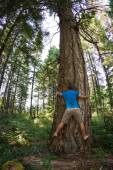 Tree hugger — Stock Photo