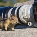 Curious chipmunk — Stock Photo #56076629
