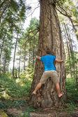 Tree hugger — Stock Photo