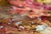 Autumn leaves in water — Stock Photo