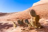Piaskowiec pustynia — Zdjęcie stockowe