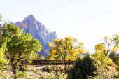Autumn in Zion National Park — Stock Photo