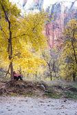Herfst buitenshuis — Stockfoto