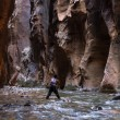 Hiking the Narrows in Zion NP — Stock Photo #60736509