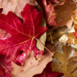 Autumn leaves — Stock Photo #60766175