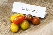 GMO tomatoes — Stock Photo