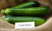 Fresh organic zucchini  — Stock Photo