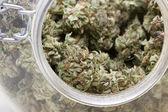 Medicinal Marijuana  — Stock Photo