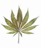 Classic marijuana leaf  — Stock Photo