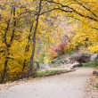 Autumn in Zion NP — Stock Photo #67843859