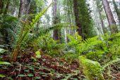 Förhistoriska skog — Stockfoto