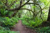 Nature walk — Stock Photo