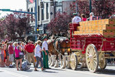 Budweiser Clydesdales in Coeur d' Alene, Idaho — Stockfoto
