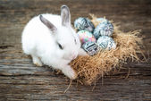Cute white rabbit with Easter egg in nest — Stock Photo