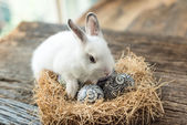 Cute white rabbit with Easter egg — Stock Photo