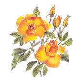 Akvarell rosor blommor — Stockvektor