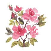 Watercolor roses flowers — Stock Vector