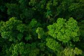 Rain forest from air near Kuranda, Queensland, Australia — Stock Photo