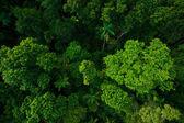 Rain forest from air near Kuranda, Queensland, Australia — Stock Photo