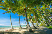 Palm trees on the beach of Palm Cove — Stok fotoğraf