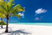 Due palme Affacciato sulla laguna blu e spiaggia bianca — Foto Stock