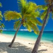 Beach with coconut palm trees — Stock Photo #69096669