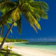 Palm trees and sandy beach — Stock Photo #69096719