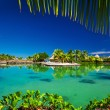 Tropical resort with a green lagoon and palm trees — Stock Photo #72913293