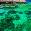 Water villas on the tropical reef — Stock Photo #78984694