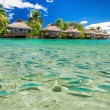 Fish swimming in the lagoon with overwater villas — Stock Photo #78984796
