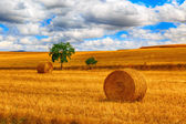 Round bale of straw in the meadow — Stock Photo