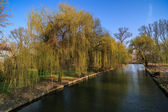 Weeping willow on the shore of a lake in the park — Stock Photo