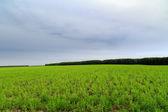 Pole divoké trávy — Stock fotografie