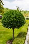 Beautiful ornamental plant in the garden — Stock Photo