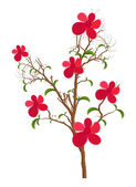 Decorative Flowers Plant — Vettoriale Stock