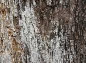 Scruffy Tree Bark — Stock Photo