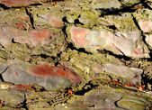 Decayed Tree Bark — Stock Photo