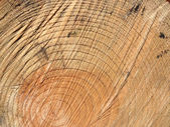 Scruffy Wood Texture — Stock Photo