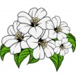 Bunch of White Flowers — Stock Vector #64339605