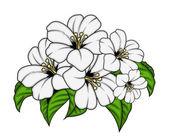 Artystyczne dekoracyjne kwiaty kilka — Wektor stockowy