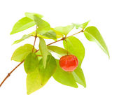 Eugenia uniflora fruit — Stock Photo