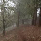 Inland Gran Canaria, fog at Las Montanetas — Stock Photo