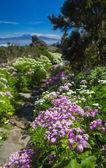 La Gomera, flowers by the path — Stockfoto