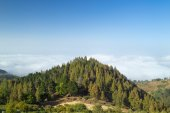 Inland Gran Canaria, view over the tree tops towards cloud cover — Stock Photo