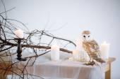 Сова, белая сова, сипуха — Стоковое фото