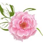 Rose — Stock Vector #65798767